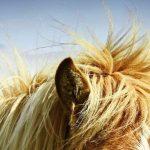 Pferd Hund Katze