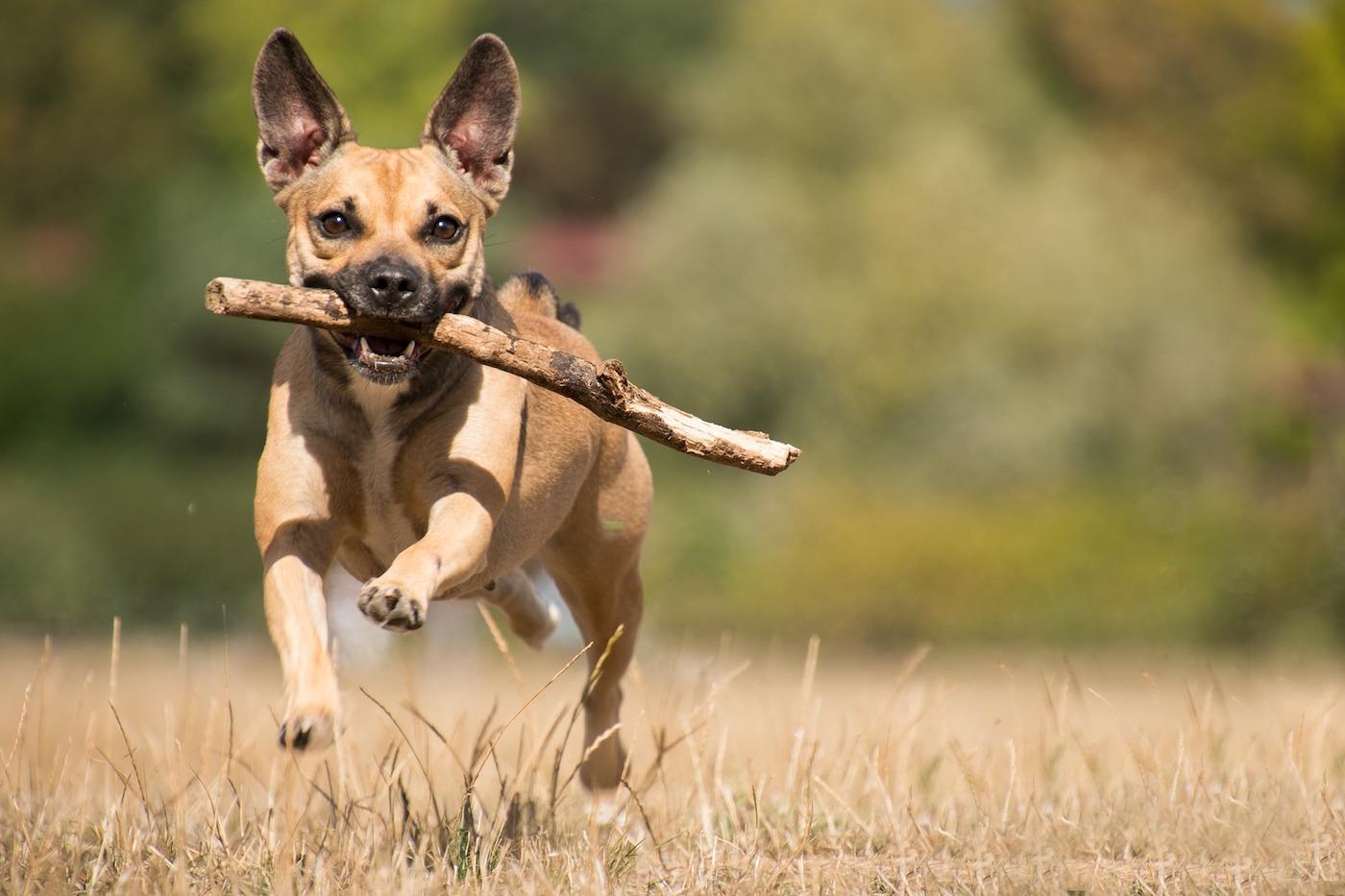 Hunde-Osteopathie