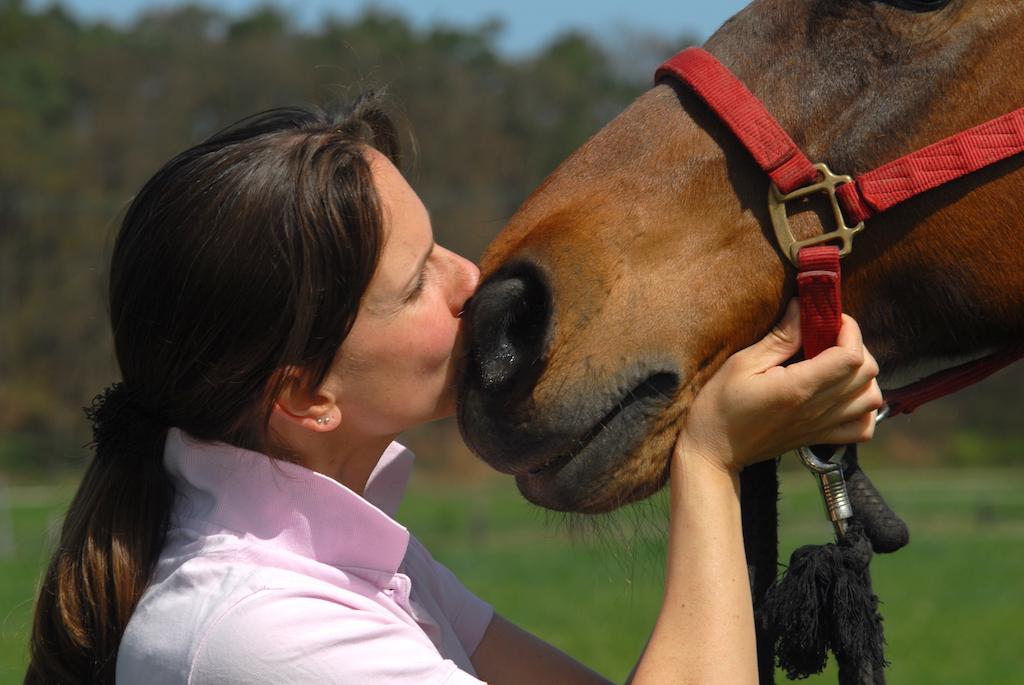 Traumatherapie für Pferde